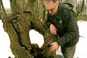 Husker du det berømte Prinsessetræ? Nu ligger det og venter blandt andre kuriositeter