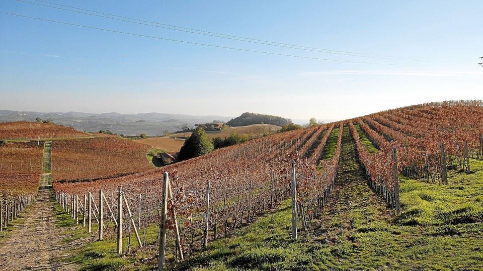 Gemmas marker er spredt ud over et stort område i hjertet af Piemonte.