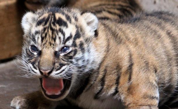 Viiildt: Vi myldrer i Aalborg Zoo