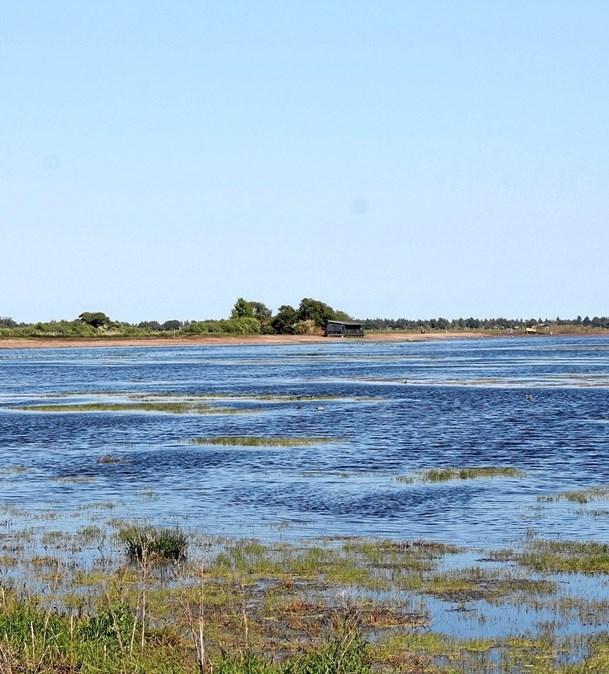 Vildmosen er optaget i Danmarks Naturkanon