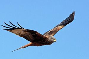 Klimaændringer ændrer fuglelivet