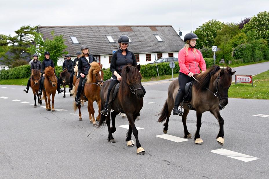 10 år med islandske heste