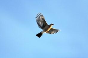 Fugletur ved Hirtshals Fyr