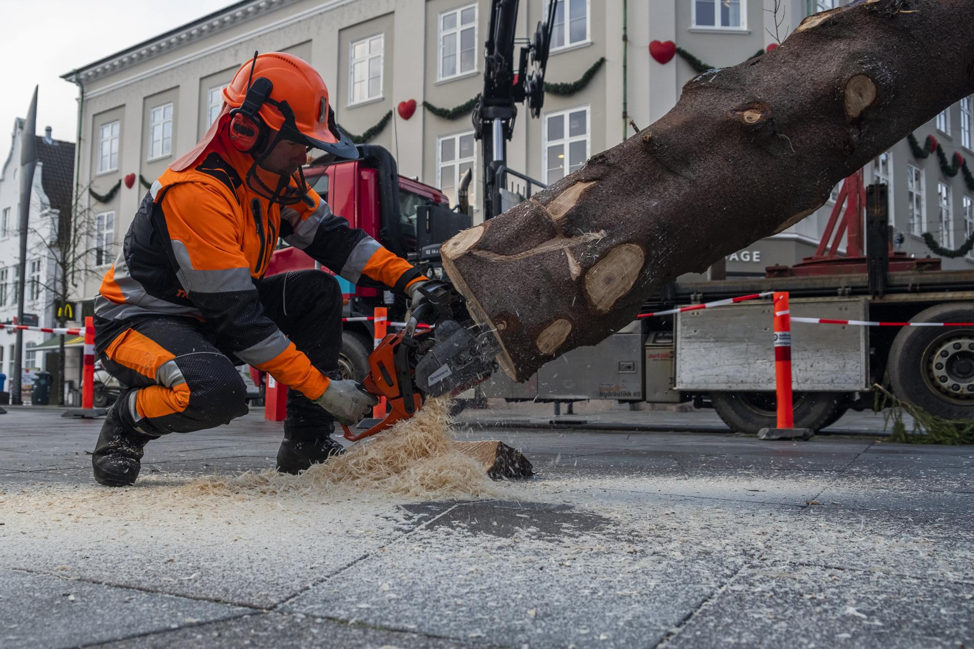 Foden af træet skal skæres til, før det kan rejses. Foto: Lasse Sand