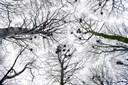 Voldsom larm og støj: Rågekoloni generer i Øster Hornum