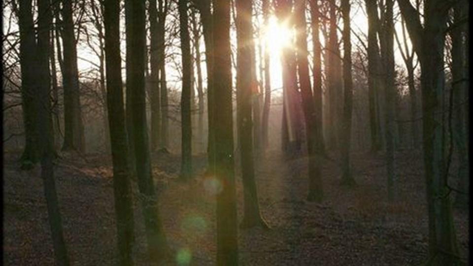 På en smuk plet i skoven kan man i fremtiden blive til bisat, hvis det står til idégruppen Løvfald.  Og naturen passer gravstedet. Foto: Martin Damgaard