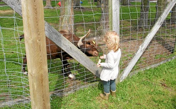 Familietur til Farm Fun