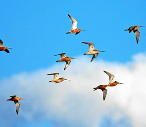 Kom på fugletur i vildtreservatet
