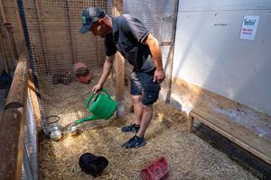 Hos Farm Fun kan varmen blive for meget af det gode: Giver kaninerne en pause