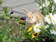 Ville du redde en 10-årig kræftsyg kanin? Britta prøvede