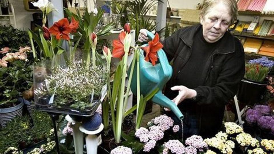 Else thomsen åbner i dag endelig sin blomsterforretning i Rørbæk igen. Foto: Claus Søndberg