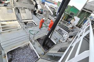 Kringlede regler: Skipper risikerer bøde for at have losset fisk af for tidligt