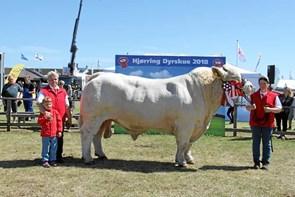 Kødkvægfamilie fra Bindslev indstillet til pris