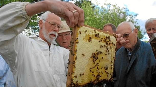 Bi-job?: Bliv klog på bier - boost blomsterne