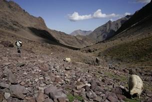 Dansk kvinde fundet dræbt nær Nordafrikas højeste bjerg
