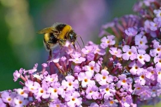 Bierne ikke mindst de vilde - skal have bedre levevilkår i Mariagerfjord Kommune.