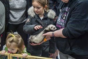 Eksotiske dyr på messe: Varan og pygmæ-pindsvin fik nyt hjem
