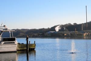 Stor hval strandet ved Hobro lystbådehavn