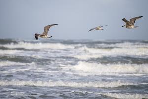 Nu rammer efteråret første kraftige blæsevejr: Nordjylland bliver hårdest ramt