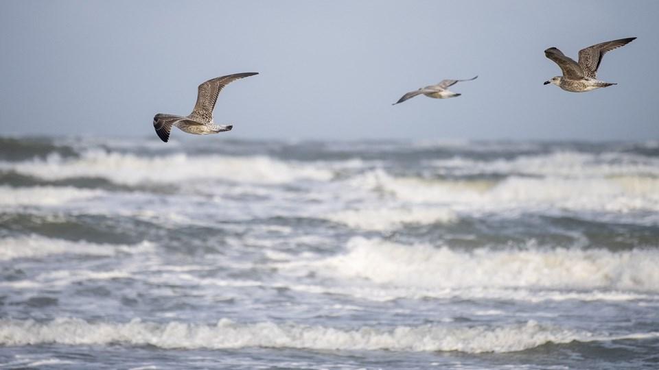 Vesterhavet i blæst. Foto: Henrik Bo