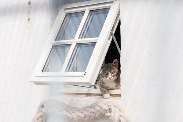 De fleste katte har adgang til både ude- og indearealer. Foto: Lasse Sand