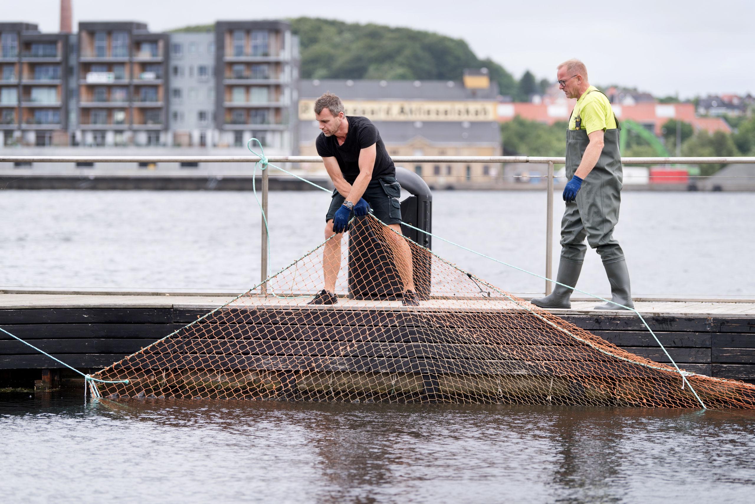 Miki Torp, til venstre, leder monteringen af sikkerhedsnettet i Aalborg Havnebad, og han bistås af makkeren Peter Holm.