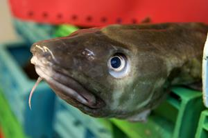 Fiskeriaftale i sigte