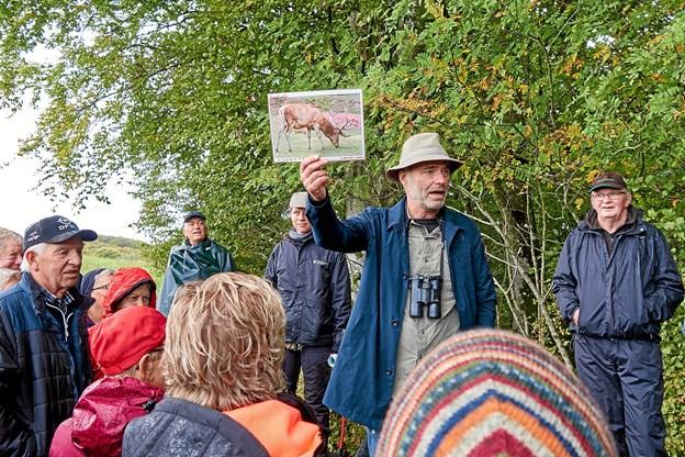 Naturvejleder Jakob Kofoed fortæller om skovens kron- og dådyr og om dyrenes særlige kendetegn. Foto: Niels Helver