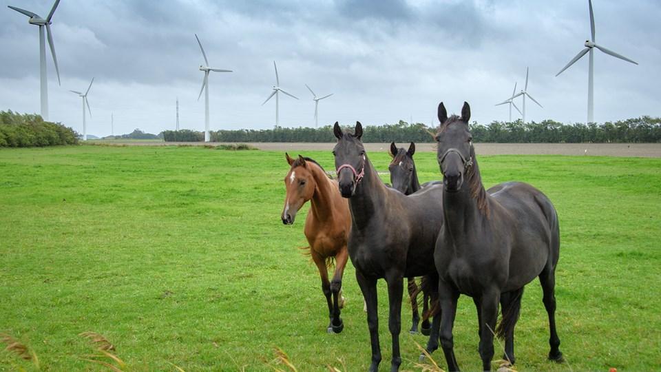 Der har været skarp kritik af flere andre vindmølleprojekter i Jammerbugt - her ved Nørre Økse Sø, hvor de 65 meter høje møller udskiftes med nogle der er 150 meter høje - samme højde som de møller der nu foreslås opført ved Pandrup.  Arkivfoto: Peter Broen