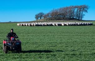 Se den vilde video: Andreas og hunden flytter 300 får