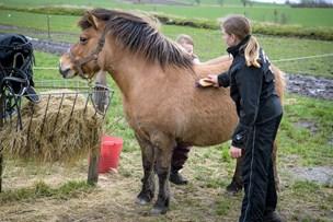 Kørekort til kat og kanin, ged og hest: Børn i Thy bliver klædt på til at holde kæledyr