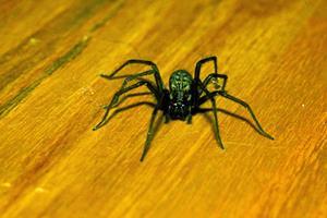 Til kamp mod edderkopperne