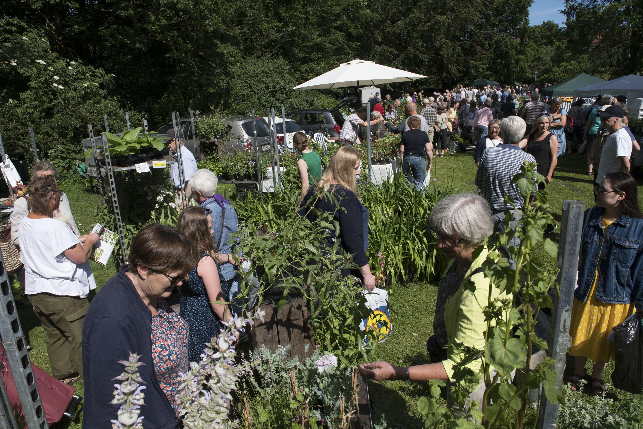 Populært havemarked vender tilbage - med fokus på bæredygtighed og genbrug