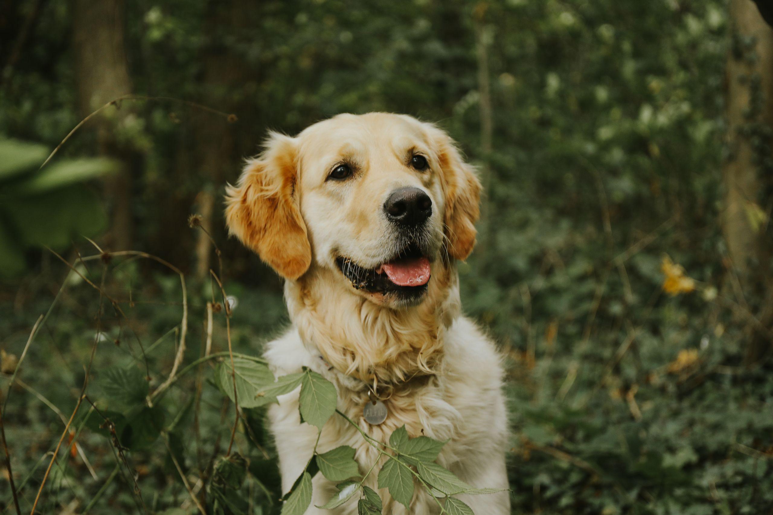 Sørg for din hunds velbefindende