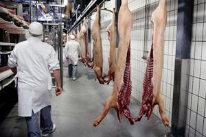 MRSA-bakterie i halvdelen af dansk svin i kølediskene