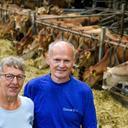 Mange års arbejde kan mærkes på kroppen: Karen og Per siger snart farvel til de sidste kvier