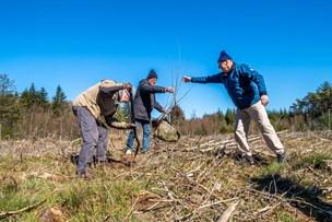 400 nye træer: Nu vender skov i Thy tilbage til den oprindelige natur