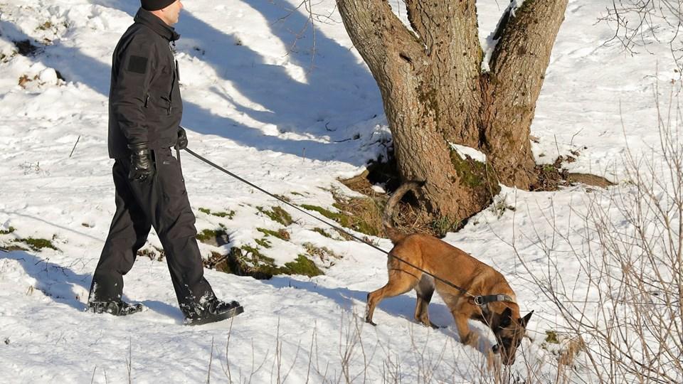 En politimand og en hund på jagt efter spor af den forsvundne Anne-Elisabeth Hagen tilbage i januar.
