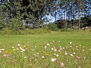 Golfklub slår et slag for biodiversitet