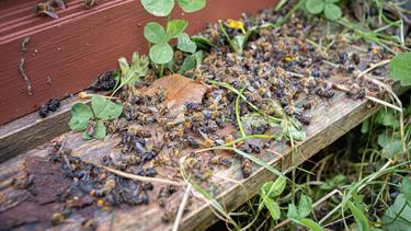 Honningbier sprængt i luften i Fjerritslev