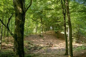 Nordjylland får ny naturpark: - En af kommunens smukkeste naturperler