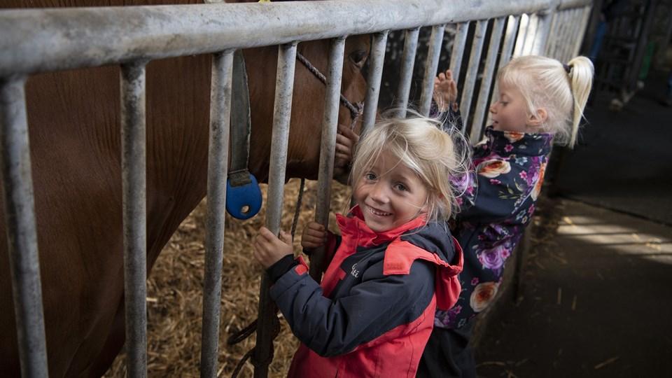 Børn og voksne var nysgerrige efter at se køerne, men køerne var også nysgerrige for at se, hvem der var kommet på besøg.  Foto: Henrik Bo