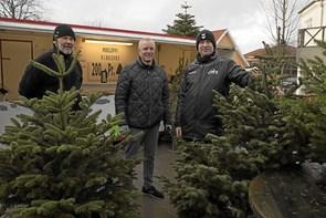 Juletræer på Torvet