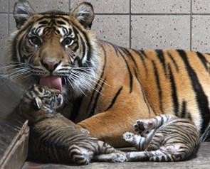 Nye små: Nuttet overraskelse i Zoo