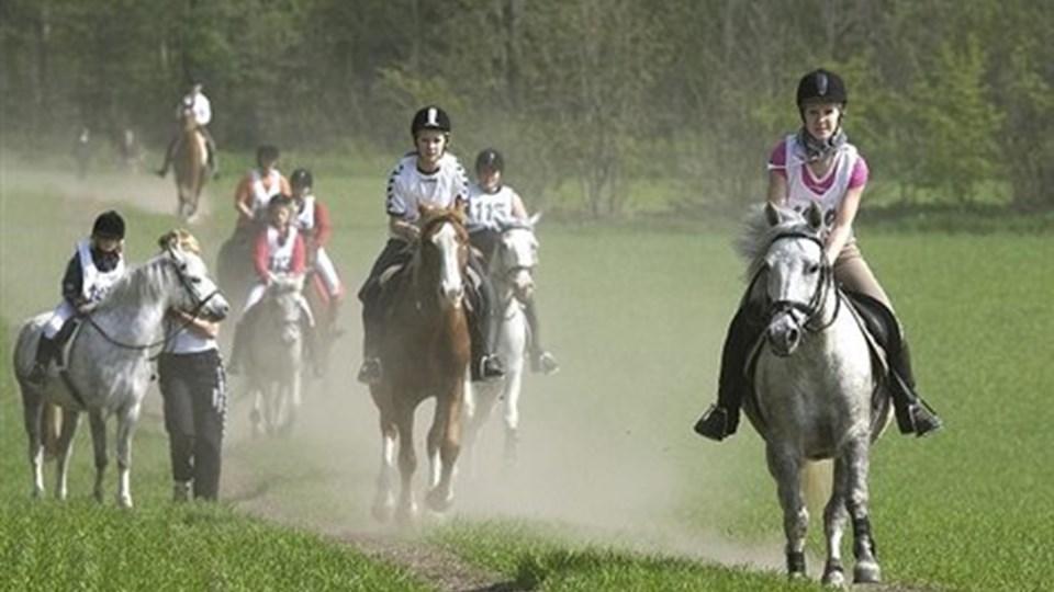 Distanceridtet og andre arrangementer skal genoplives i Dronninglund Rideklub. Arkivfoto: Henrik Louis