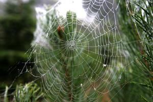 Farlig edderkop fundet i bil