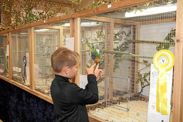Fuglene ville gerne have besøg. Foto: Flemming Dahl Jensen