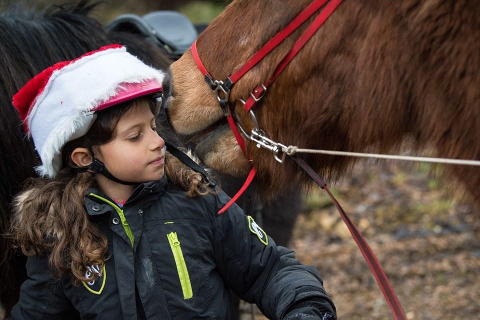 Der er god tid til at strigle og sadle op på p-pladsen ud for Trapsandevej 101 ved Vang. Malou på syv år har en lille hyggestund med en af de garvede islandske heste, der nipper lidt i nissehuen