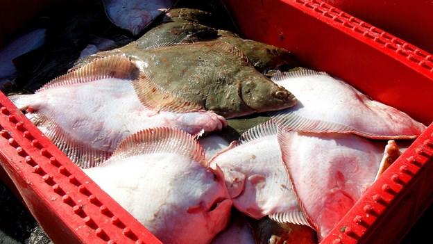 Danske fiskere utilfredse