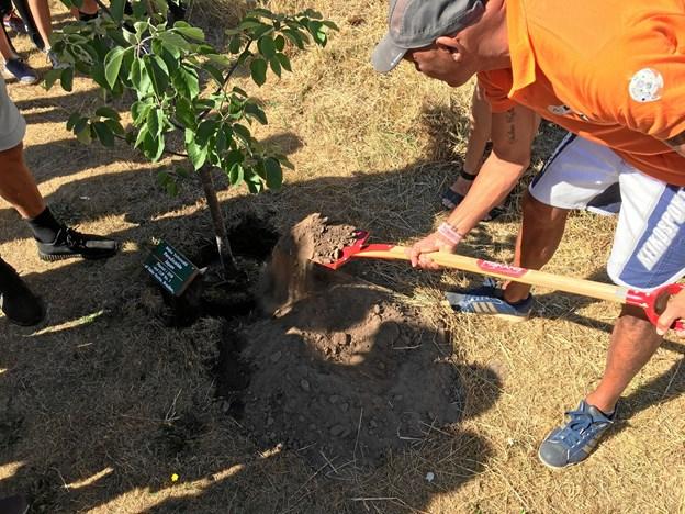 Jord skal der til, hvis træet skal finde grokraft